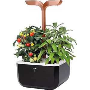 VER SSBCO-FR - Indoor Garden